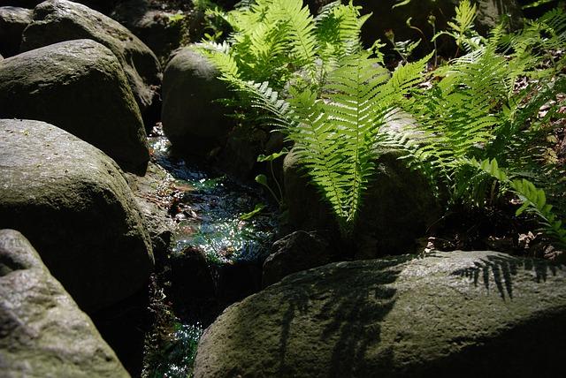 kapradina u potoka